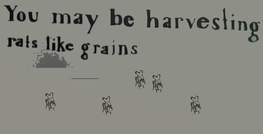 You may be harvesting rats like grains banner